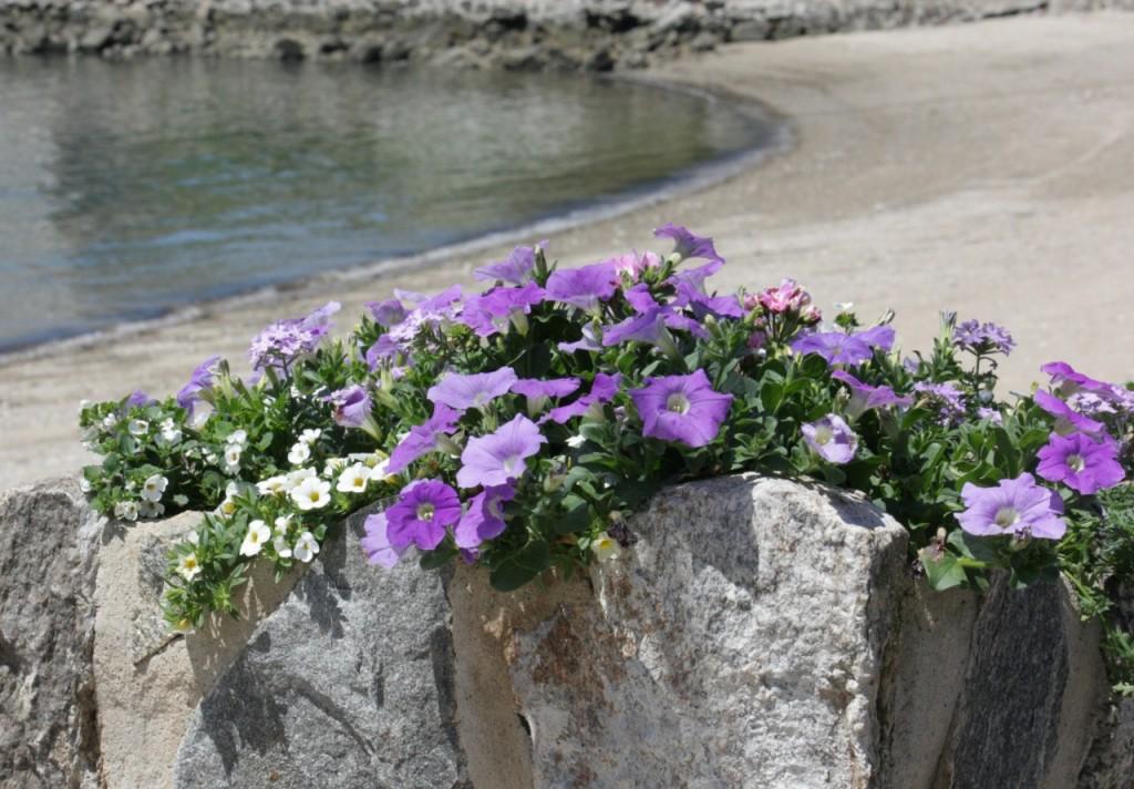 blommor 9975